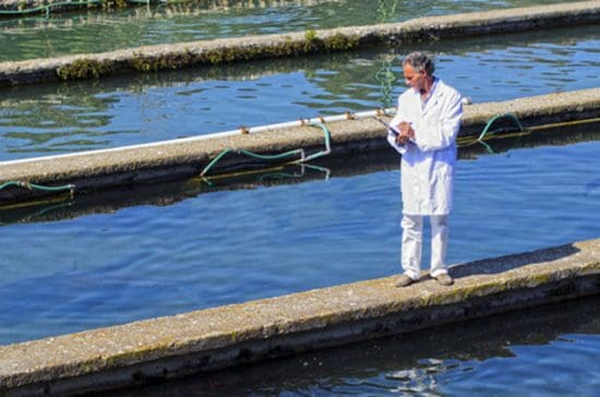 Recirculating Aquaculture Services
