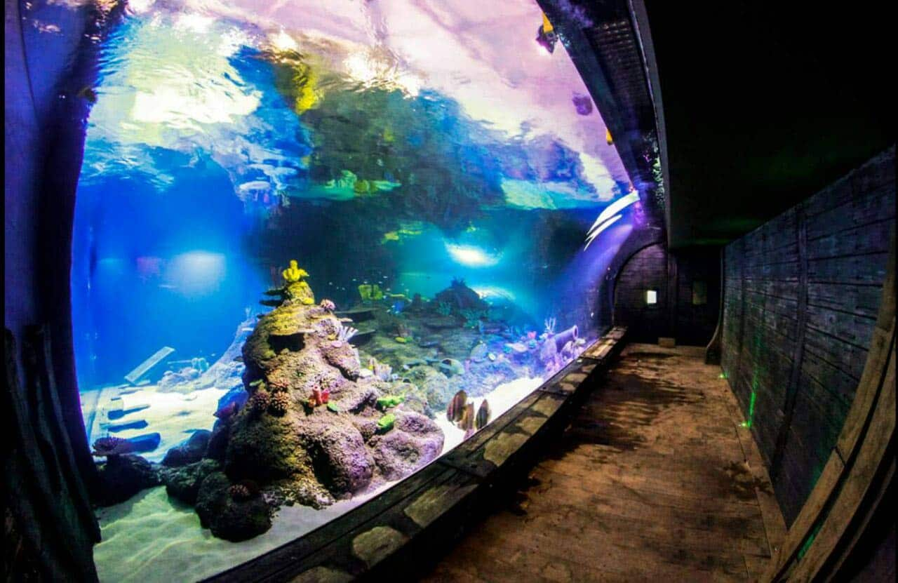 Skegness Aquarium – Pirates Lagoon Public Aquarium