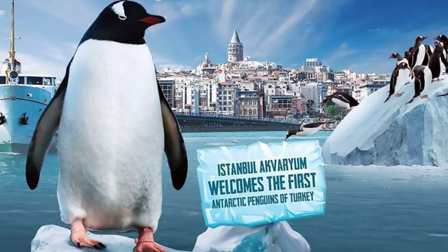 Istanbul Aquarium – Penguins Encounter