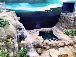 Kuwait Coutant Project Aquarium Ponds