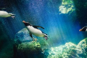 Al Ain Zoo Penguins