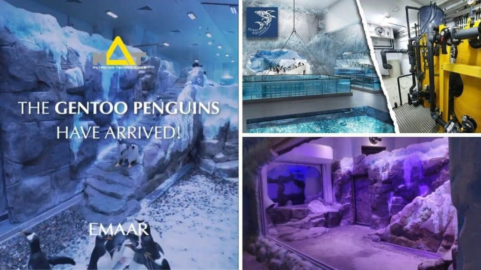 Dubai Aquarium & Underwater Zoo Penguins