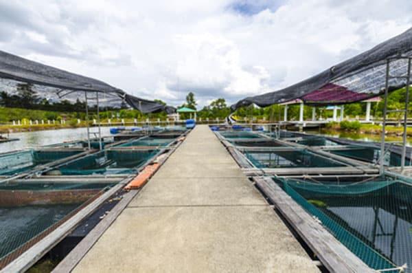 Recirculating Aquaculture Systems Ras Mat Lss