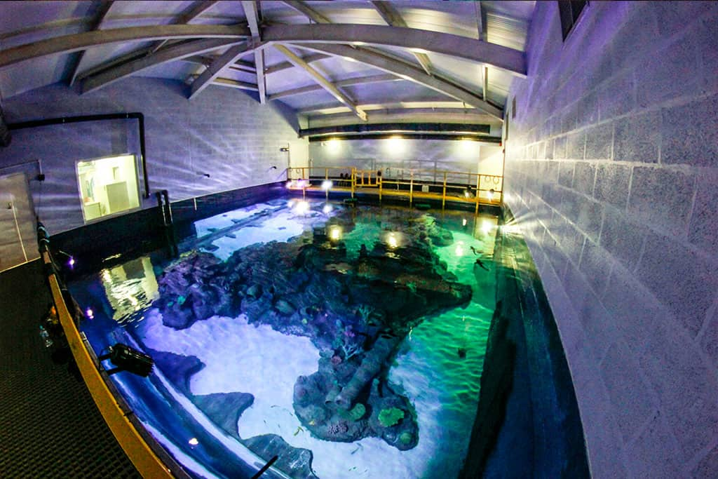Skegness Aquarium - Pirates Lagoon Public Aquarium