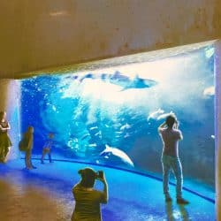 Shark aquarium in Mexico