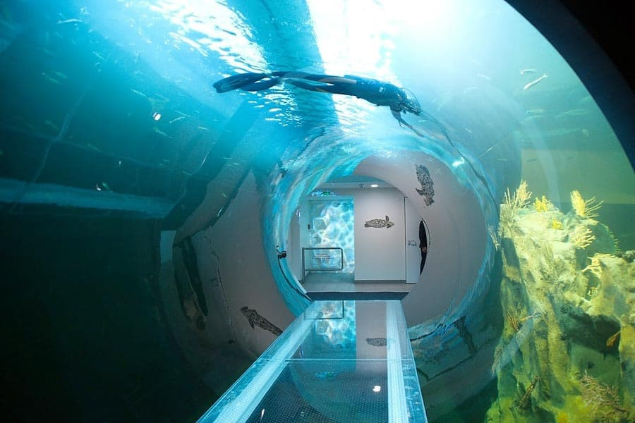 Haus Des Meeres Aquarium With 10m Atlantic Tunnel