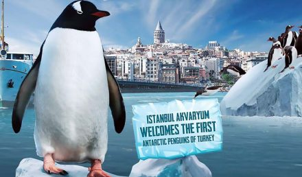 The latest attraction of Istanbul Aquarium (Florya Aquarium) is the Penguinarium!