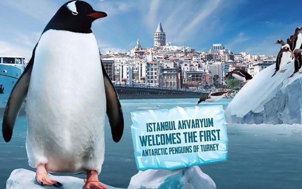 Istanbul Aquarium Penguins