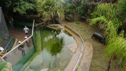 Hippopotamus Exhibit