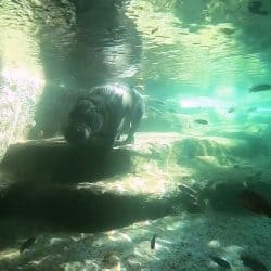 Finally Crystal Clear Water Quality for Hippopotamus