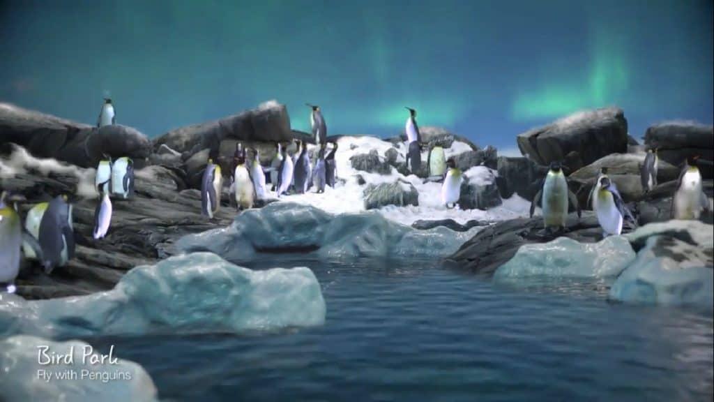 Penguins - Mandai Zoo